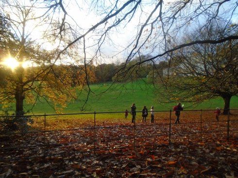 Hamstead Heath in November.